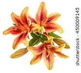 flowers composition with lilies ... | Shutterstock . vector #450009145