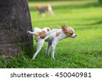 cute small dog peeing on a tree ... | Shutterstock . vector #450040981