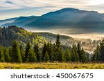 cold morning fog on hot sunrise in spruce forest in mountains - stock photo