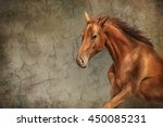 Drawing Red Horse Portrait Oil...