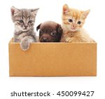 Stock photo kittens and puppy in a box isolated on white background 450099427