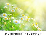 Chamomile Field Flowers Border...