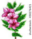 pink periwinkle madagascar... | Shutterstock . vector #450276421