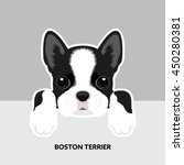 Stock vector vector illustration portrait of boston terrier puppy dog isolated 450280381
