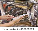 girl use mobile phone  catfish...   Shutterstock . vector #450302221