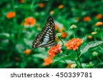 Macro Butterfly On Flower In...