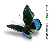 Small photo of The beautiful flying velvet green to blue butterfly (Common Archduke, Lexias pardalis) on white background with soft shadow beneath, fascinated nature