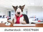 Stock photo business dog using his computer in the office 450379684