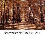 autumn in america landscape of... | Shutterstock . vector #450381241