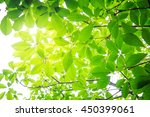 abstract of natural leaves with ... | Shutterstock . vector #450399061