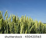 rye | Shutterstock . vector #450420565
