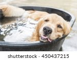 Dog In Pool At Summer  Shallow...