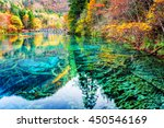 amazing view of submerged tree... | Shutterstock . vector #450546169