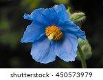 Sky Blue Flower Of Himalayan...