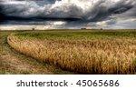 A Cornfield Before A Heavy Rain