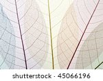 dried leaf skeleton background | Shutterstock . vector #45066196