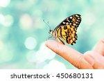 beautiful butterfly sitting on... | Shutterstock . vector #450680131