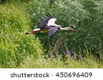 The Image Of A Stork Flying Lo...