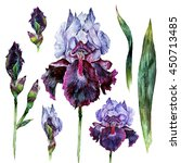 Watercolor Iris Flower  Buds ...