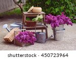 Purple Lilac In The Metal Bucket