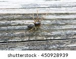 Small photo of Spider Neriene montane.