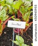 swiss chard growing in a garden ... | Shutterstock . vector #450945955