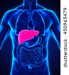 human liver anatomy... | Shutterstock . vector #450965479