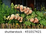 Small photo of The beauty of decorative mallow flower in garden - Alcea resea