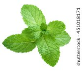 fresh raw mint leaves isolated.  | Shutterstock . vector #451018171