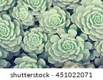 Green Rosettes Of The...