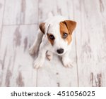 puppy at home. dog at white | Shutterstock . vector #451056025