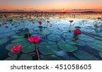 The Sea Of Red Lotus  Lake Non...