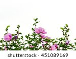 The Beautiful Rose Of Sharon
