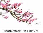 plum blossom isolated on white... | Shutterstock . vector #451184971