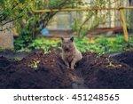Cat Resting In The Garden