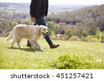 Stock photo close up of golden retriever on walk in countryside 451257421
