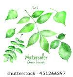 collection of green summer... | Shutterstock . vector #451266397