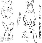 rabbit  vector cute hare ... | Shutterstock .eps vector #451273054