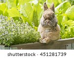bunny sitting in a wooden box... | Shutterstock . vector #451281739