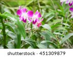 Orchid Purple Flowers