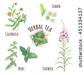 Set Of Herbal Tea Ingredients ...