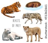 set of animals  sleeping bear ... | Shutterstock . vector #451362661