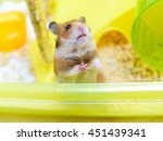 Funny Hamster Looking Out Of...