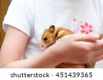 Red Tame Hamster In The Hands...