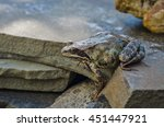 frog sitting on a stone | Shutterstock . vector #451447921