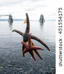 Small photo of Two starfishes were catched accidentally with a fishhook on the beach at Kachemak Bay of Homer in Alaska.