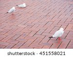 Three Silver Gulls Are On The...