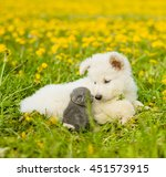 Stock photo puppy and kitten looking at each other on the green grass 451573915