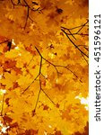 bright autumn leaves in the... | Shutterstock . vector #451596121