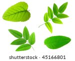 bright green leaves isolated... | Shutterstock . vector #45166801